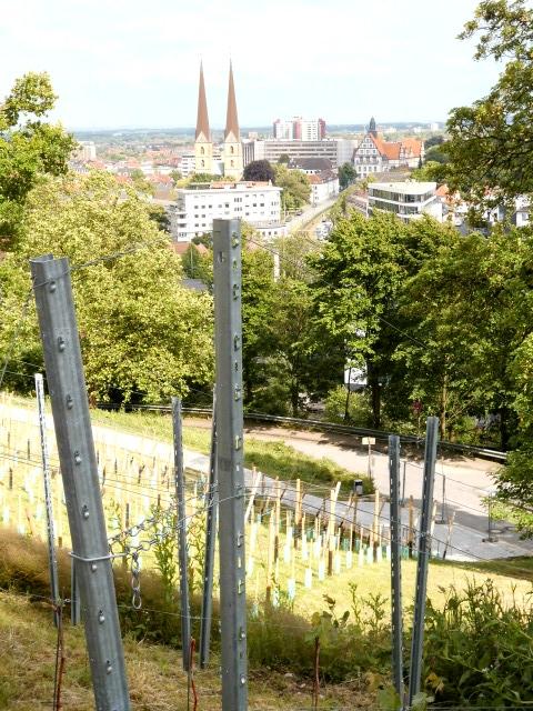 Weinberg Winzersche Garten